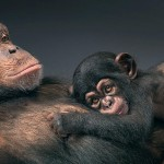 tim-flach-more-than-human-animal-portraits-chimpanzee-mother-and-child
