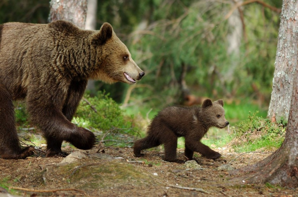 Maman ours et son ourson