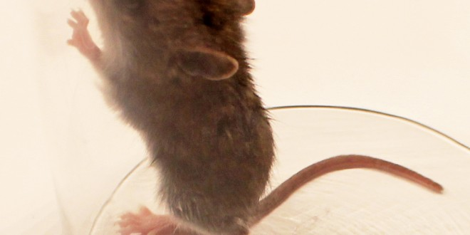 souris test animaux alternatives