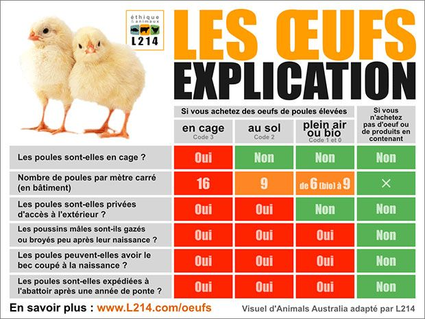 oeufs categorie differences