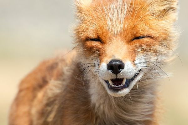ivan-kislov-fox-photography-11